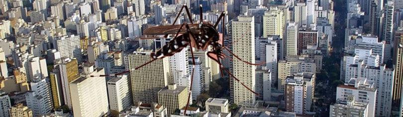 Brote del Dengue. Mosquito aedes aegypti vector del dengue