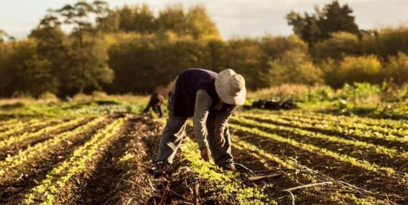 Trabajadores de la Tierra