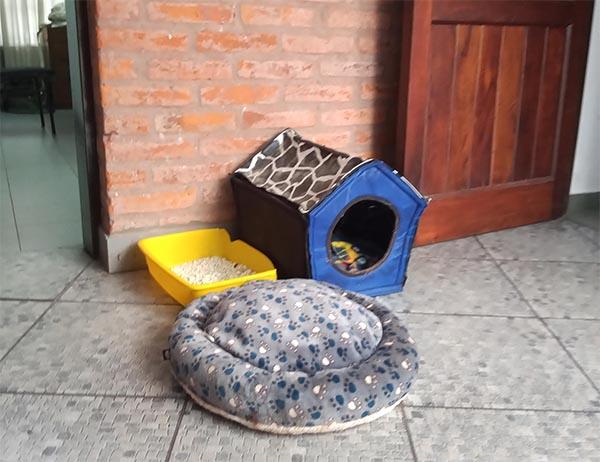 casita de los gatos